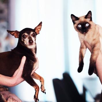 shocked_cat_dog